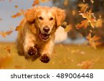 dog  golden retriever jumping... | Shutterstock . vector #489006448