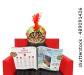 funny cat at the hairdresser... | Shutterstock . vector #489091426