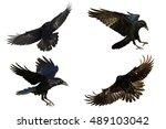 Birds   Mix Common Ravens ...
