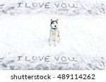 Siberian Husky Dog Sitting In...