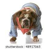 English Bulldog Wearing Cowboy...