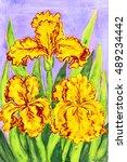 Three Yellow Irises  Hand...