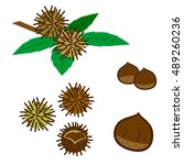 set of chestnuts | Shutterstock .eps vector #489260236