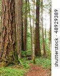 hiking trail through the umpqua ... | Shutterstock . vector #48929389