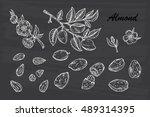 hand drawn almonds set ... | Shutterstock .eps vector #489314395