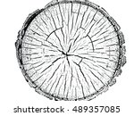 Structure Of Cracks Of Wood...
