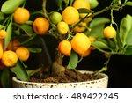 mandarin branch close up of... | Shutterstock . vector #489422245