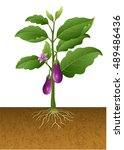 Illustration Of Eggplant With...