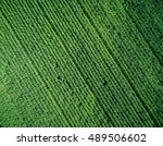 green country field with row... | Shutterstock . vector #489506602