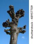 defoliated trees on street at... | Shutterstock . vector #48957709