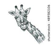 giraffe sketch illustration | Shutterstock .eps vector #489582106