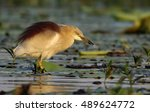 Pond Heron With Fish In The...