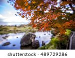 Fall Foliage At Suizenji Jojue...