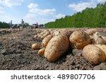 harvesting potatoes on field ... | Shutterstock . vector #489807706