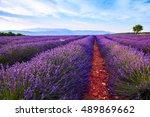 lavender field summer landscape ... | Shutterstock . vector #489869662