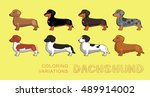dog dachshund coloring... | Shutterstock .eps vector #489914002