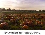 Martindale Pumpkin Patch Farm...