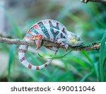 chameleon on a branch | Shutterstock . vector #490011046