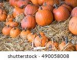 Large And Mini Pumpkins On...
