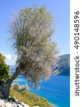 Small photo of The tree on the slope of the island in the Aegean Sea