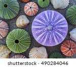 variety of colorful sea urchins ... | Shutterstock . vector #490284046