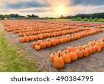 A Field Of Picked Pumpkins...