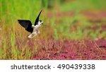 long feet snipe | Shutterstock . vector #490439338