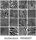 highly detailed zebra vector...