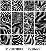highly detailed zebra vector...