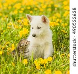 Stock photo puppy and kitten looking at each other sitting on green grass 490532638