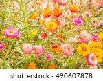 full color straw flower | Shutterstock . vector #490607878