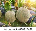 Japanness Melons  Green Melons...