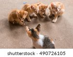Stock photo many baby cats standing and playing 490726105