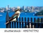 Laughing Kookaburra Sitting On...