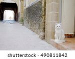 Small photo of The cats on the alleys of Essaouira