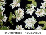 a composition of pressed... | Shutterstock . vector #490814806