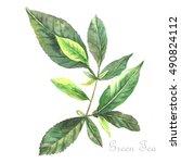 Watercolor Green Tea.  Origina...