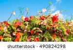 Flowers Against The Blue Sky...