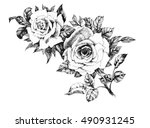 hand drawn garden rose flower... | Shutterstock .eps vector #490931245
