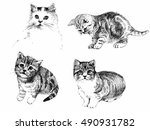 Stock vector black and white cats and kittens set inkn hand drawn vector illustration 490931782