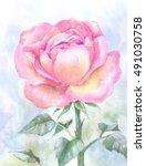 pink garden rose  watercolor... | Shutterstock . vector #491030758