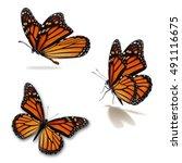 beautiful three monarch... | Shutterstock . vector #491116675