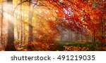 autumn in the forest  sunrays... | Shutterstock . vector #491219035