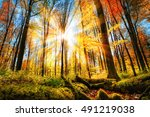 autumn scenery in a colorful... | Shutterstock . vector #491219038