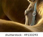 Portrait Of A Horse In The Ray...
