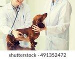 medicine  pet  animals  health... | Shutterstock . vector #491352472