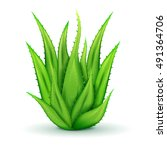 realistic aloe vera leaves of... | Shutterstock .eps vector #491364706