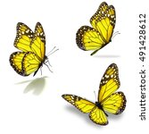 beautiful three yellow monarch... | Shutterstock . vector #491428612