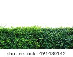 Shrubbery  Green Hedges ...