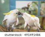 Stock photo white parrot 491491486